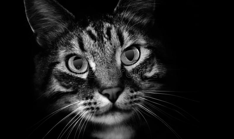 Pet Cat in Shadows stock photography