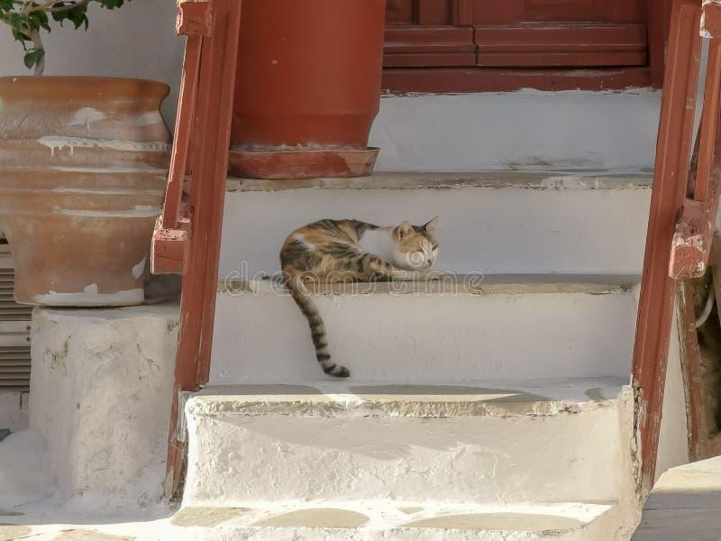 Pet cat sleeps on house steps in mykonos, greece royalty free stock image