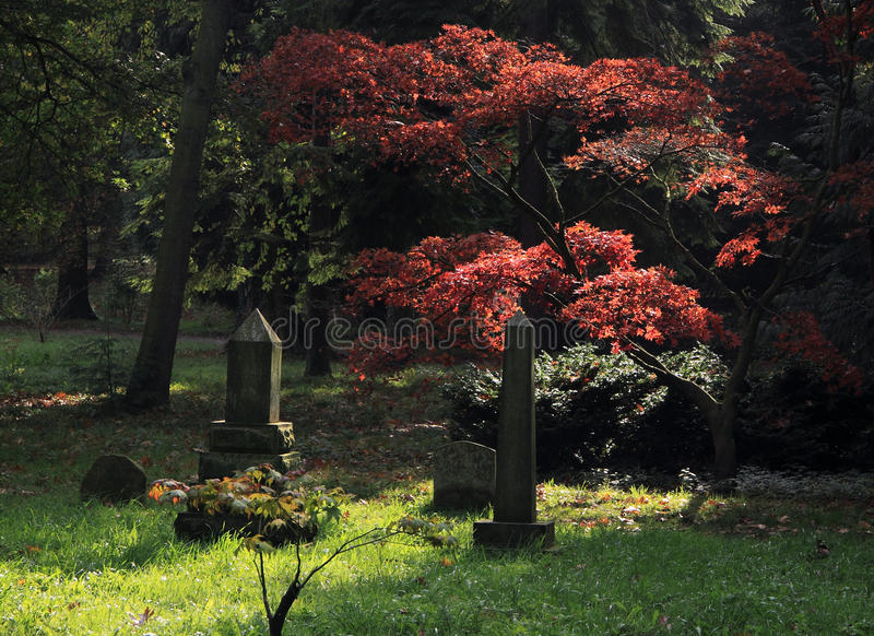 Pet Cemetry. Wooded Area for pet cemetry royalty free stock images