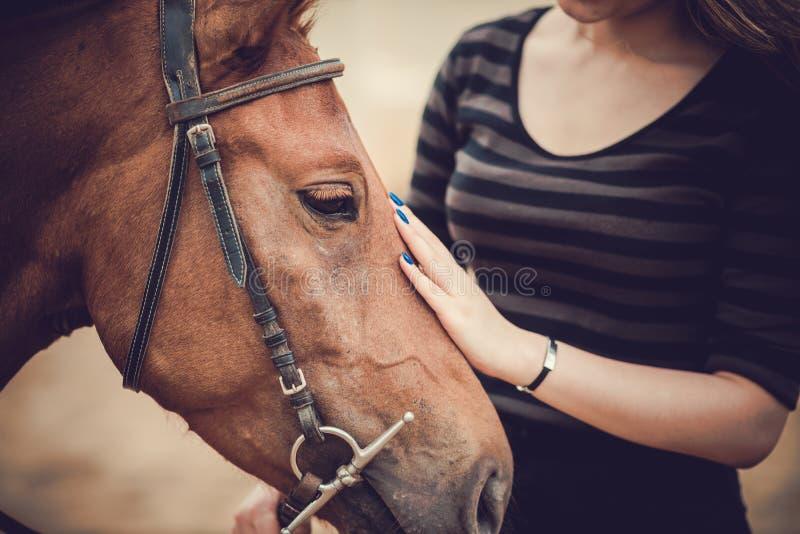 Pet. Close-up of horsewoman stroking her pet stock photo