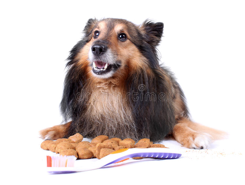 Pet dental care royalty free stock images