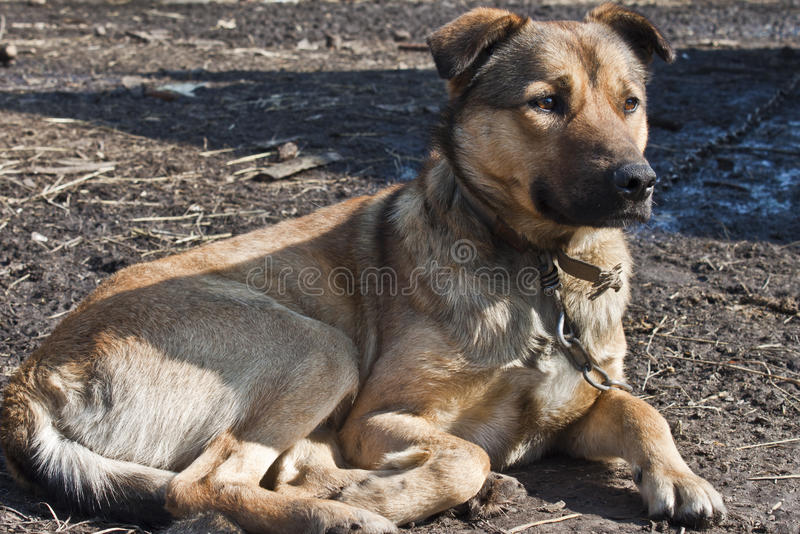 Download Pet dog stock image. Image of board, banner, grass, communicate - 23999055