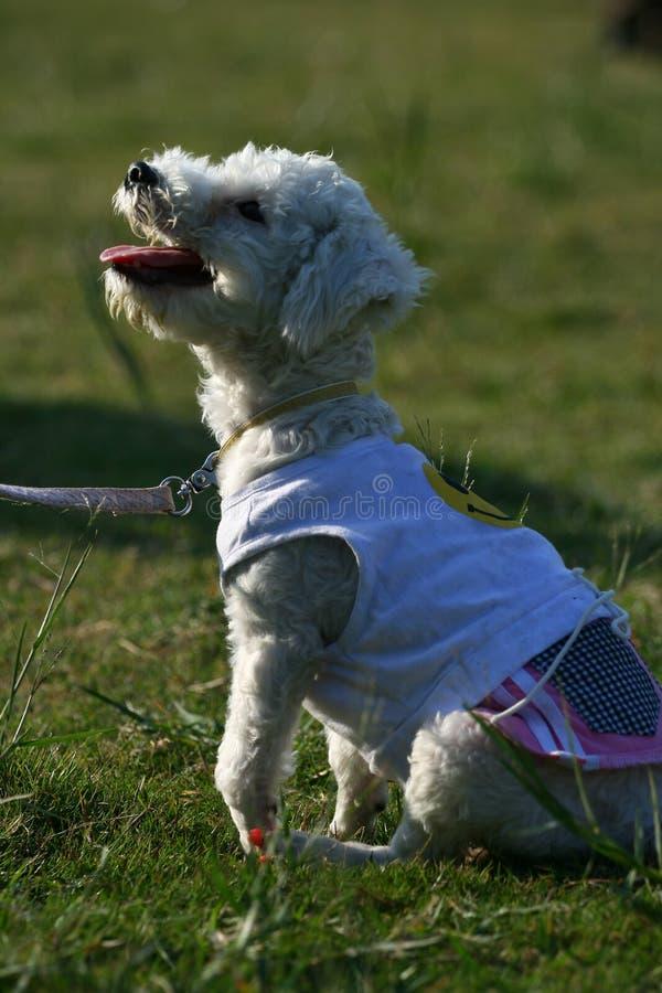 Free Pet Dog Stock Photos - 7153373