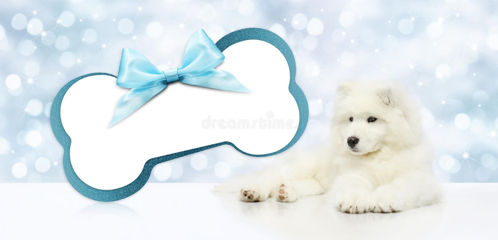Pet dog with blank gift card bone shape isolated on christmas bl. Urred lights background, template and copy space banner stock photo