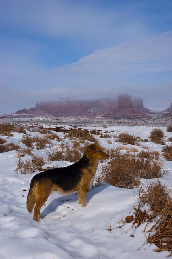 Pet Dog Exploring Snow and Winter Mountains. Pet dog Fido exploring snow and winter mountains. Sky and clouds cover distant mountain creating a beautiful scene royalty free stock photos