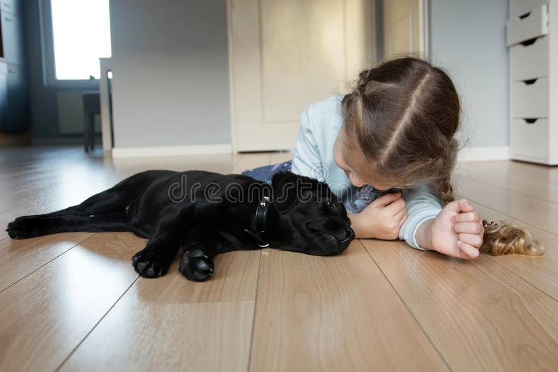 Pet dog labrador and little girl love each other stock photography
