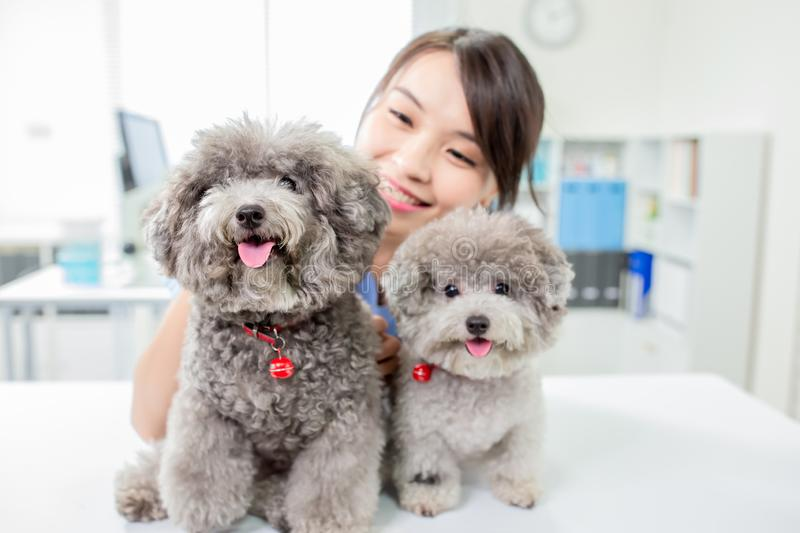 Pet dog and the vet stock image