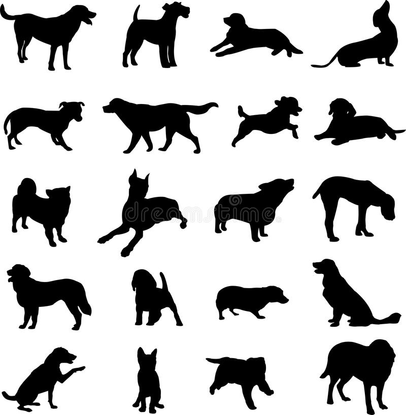 Download Pet Dogs Royalty Free Stock Image - Image: 13678836