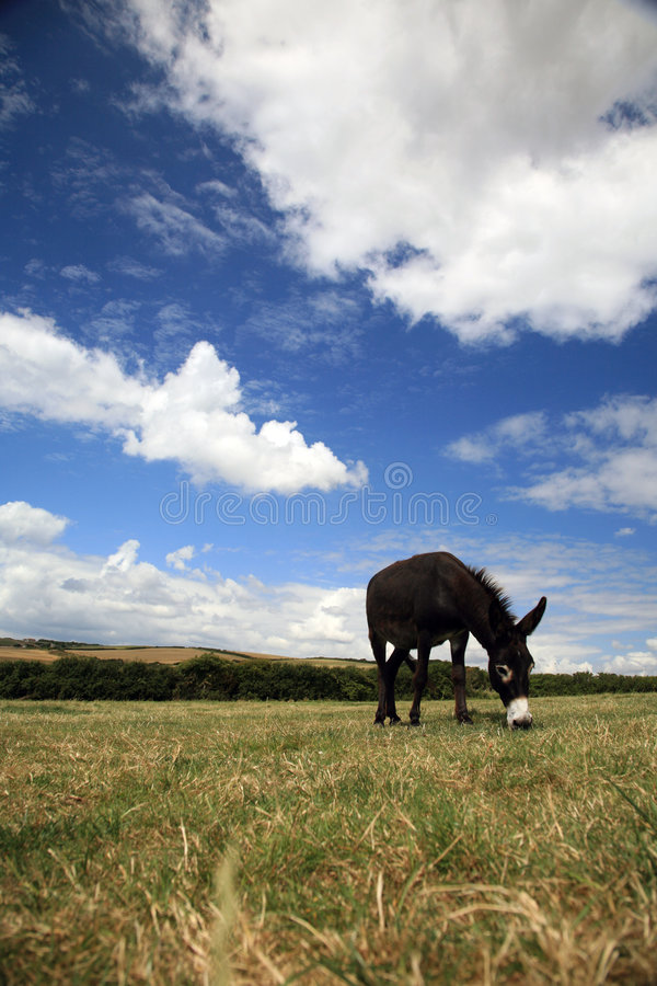 Download Pet Donkey stock photo. Image of spring, grazing, ranch - 1128718