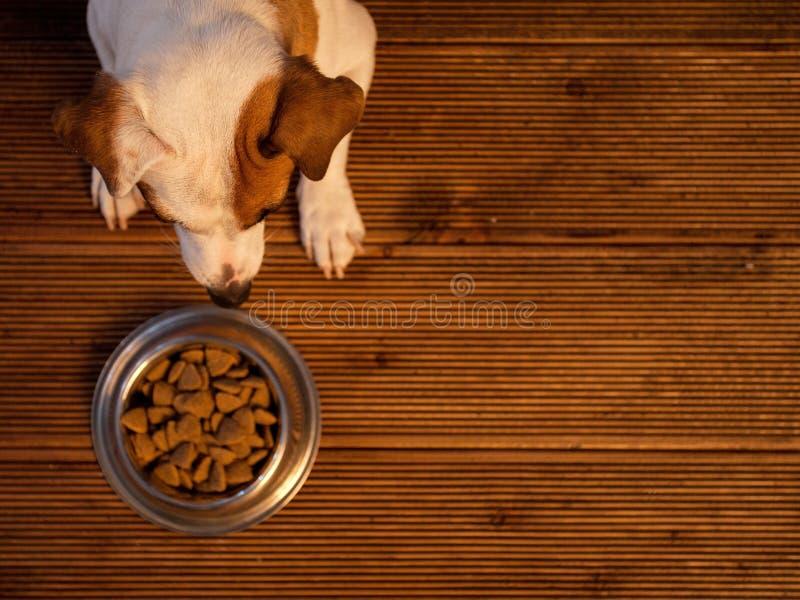 Pet eating food royalty free stock photo