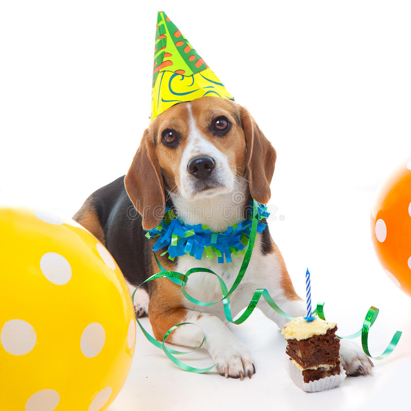 Pet first birthday party celebration royalty free stock images