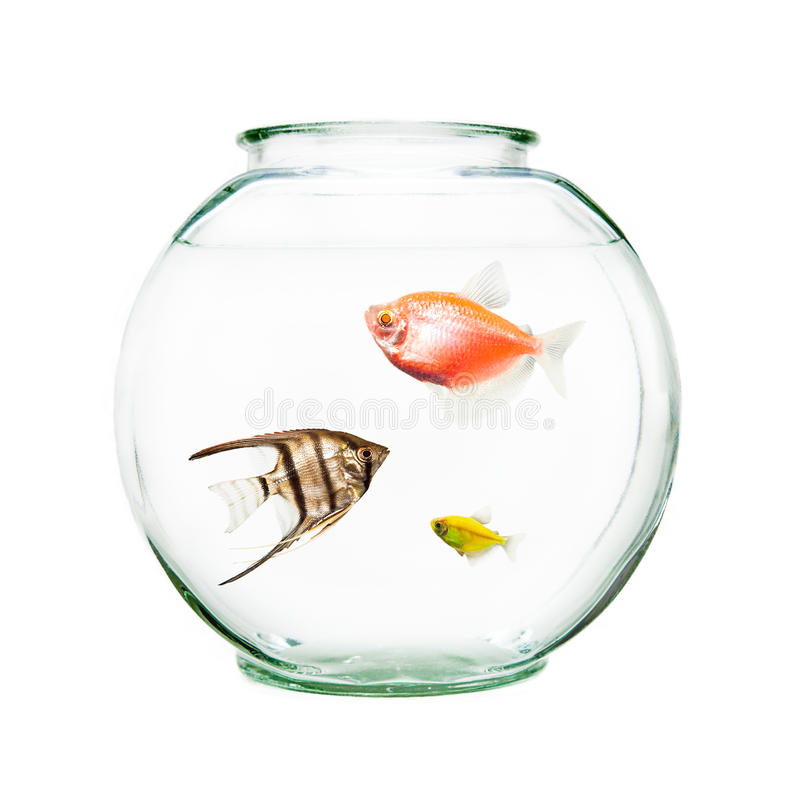 Pet fish in round bowl stock image image of yellow for Fish and pets unlimited