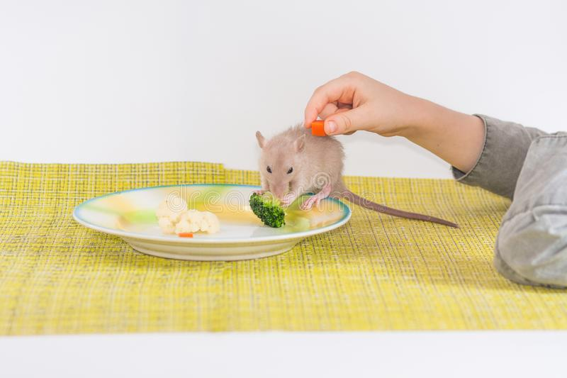 Balanced Child Nutrition Stock Images - Download 421 Royalty