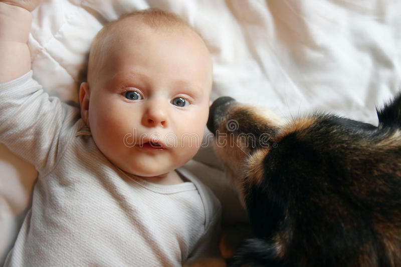 Pet German Shepherd Dog Kissing Newborn Baby stock images