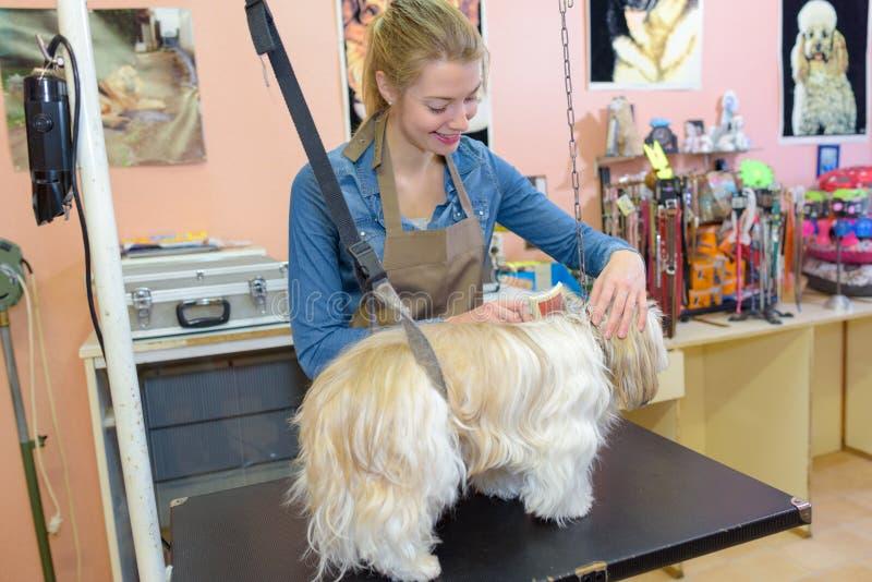 Pet groomer working with dog. Pet royalty free stock photos