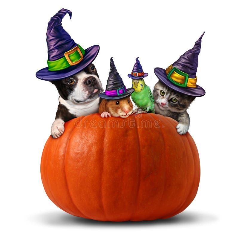 Pet Halloween animals inside a pumpkin royalty free illustration