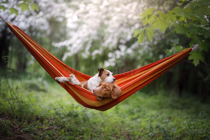 Pet in a hammock on vacation. Two dogs on vacation. stock photo