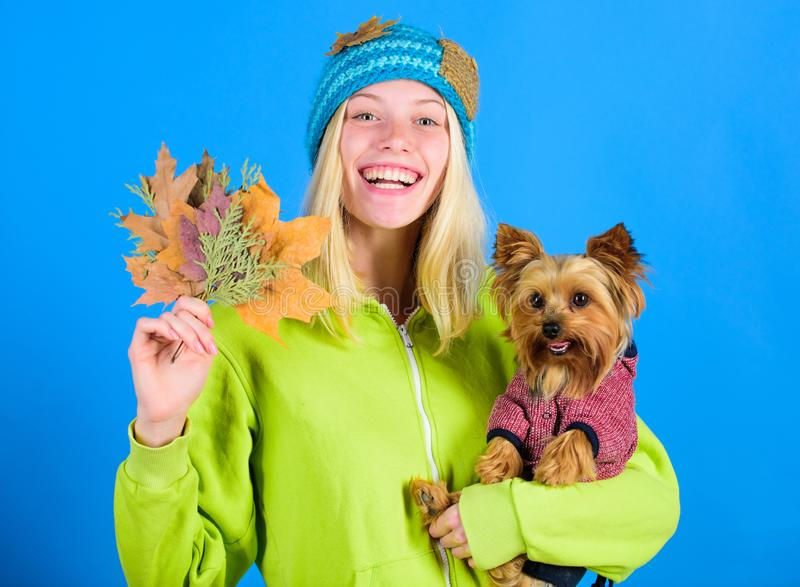 Pet health tips for autumn. Girl hug cute dog and hold fallen leaves. Woman carry yorkshire terrier. Take care pet stock photo