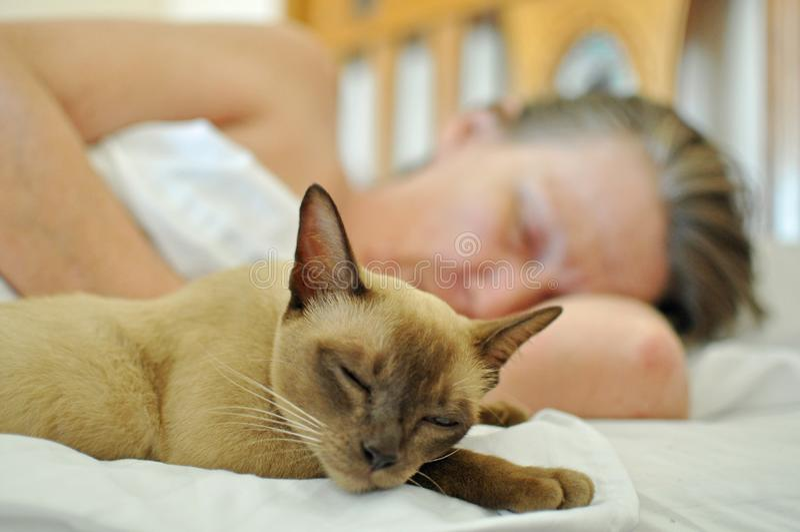 Pet il gatto che dorme sul letto con la donna più anziana matura fotografia stock