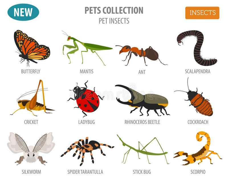 Pet insects breeds icon set flat style on white. House stock illustration