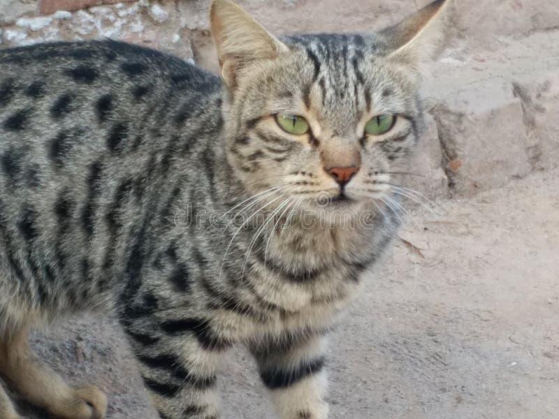 Pet Katze stockfotografie