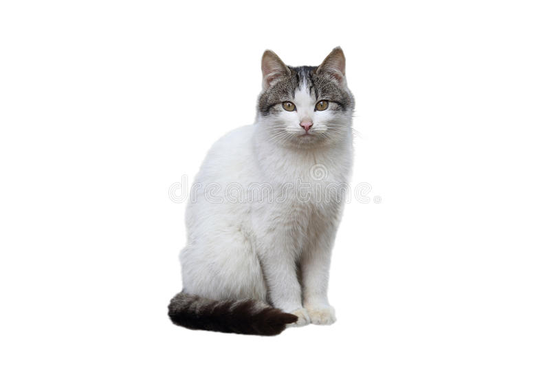Katze Pets
