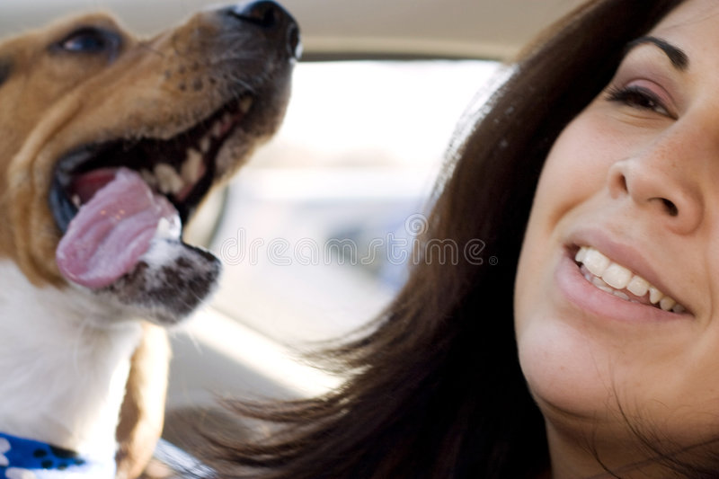 Pet lover royalty free stock photography