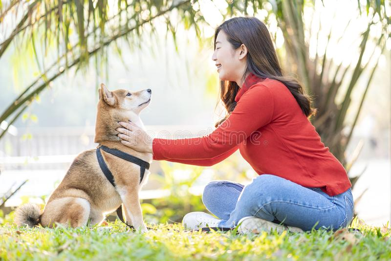 Pet lover concept. Young female and dog summer concept. The girl plays with the Shiba Inu dog in the backyard. Asian woman order to dog stock photo