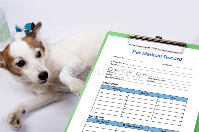 How To Get A Companion Pet Doctors Note Akbaeenw