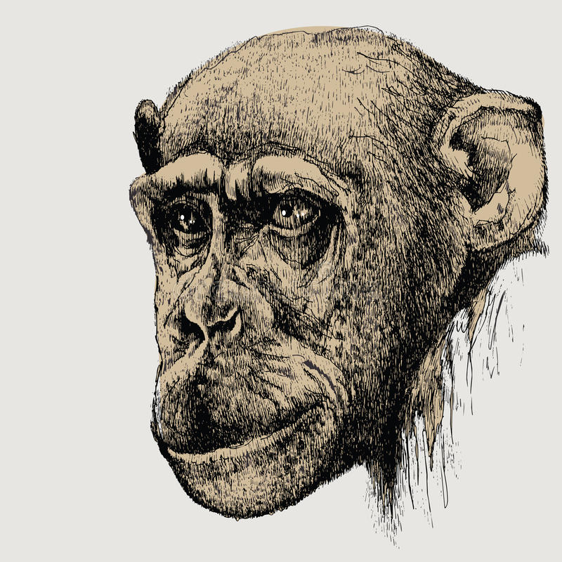 Pet monkey chimpanzee, hand-drawing. Vector illustration. royalty free illustration