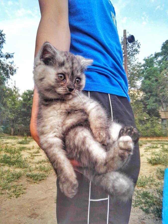 Pet o gato fotos de stock royalty free