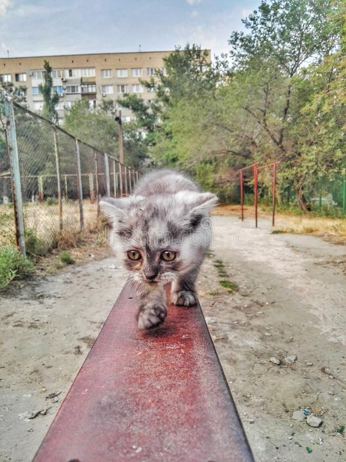 Pet o gato imagem de stock royalty free