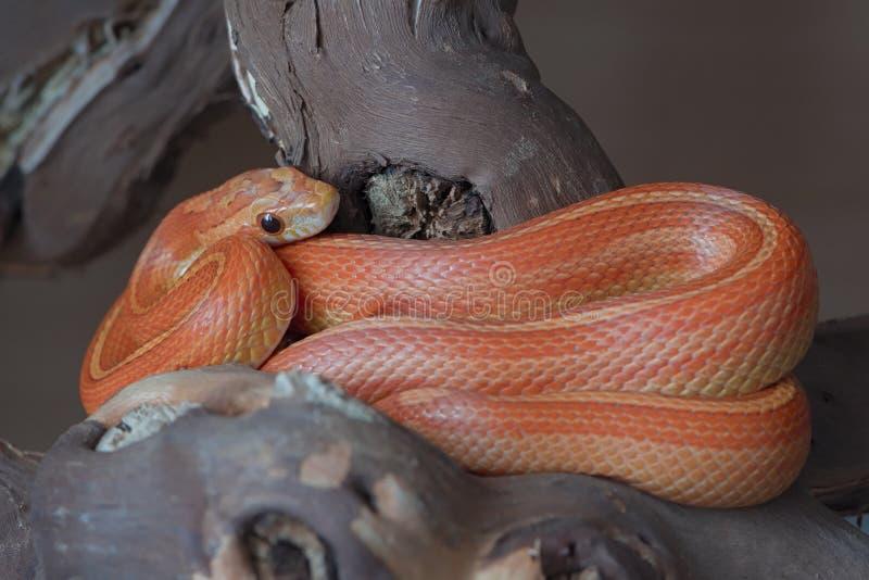 pet snake enclosure