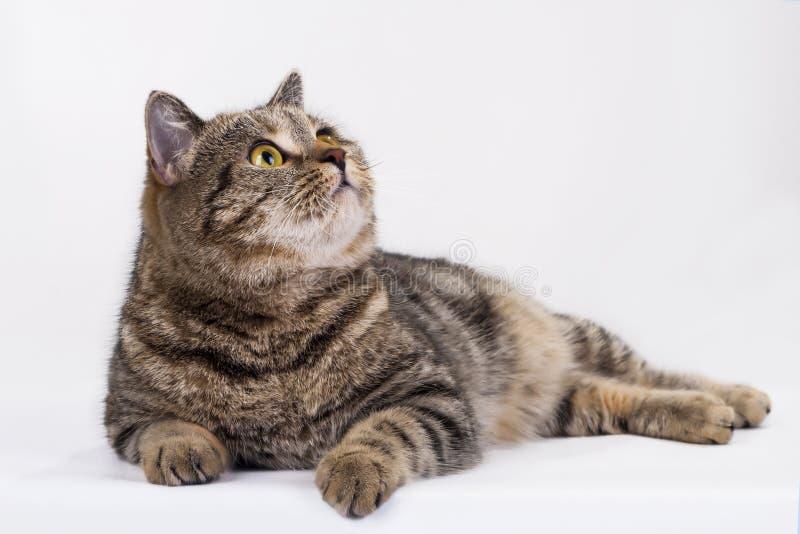 Download Pet Photo stock image. Image of eyes, black, game, animal - 24909675