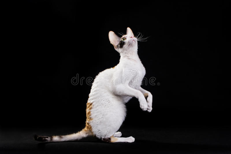 Pet Photo Royalty Free Stock Photography