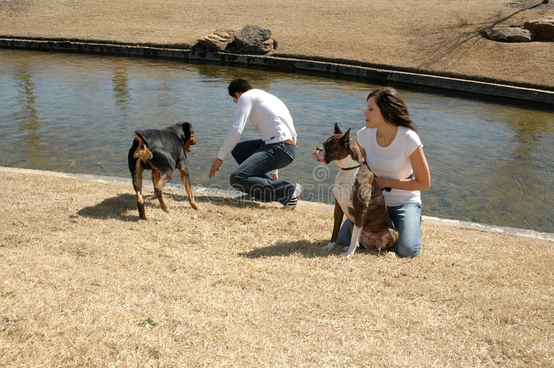 Pet Playtime. A couple playing with their dogs at the park stock images