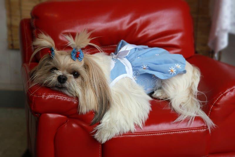Download Pet shop stock photo. Image of shop, close, tidy, cute - 13973174