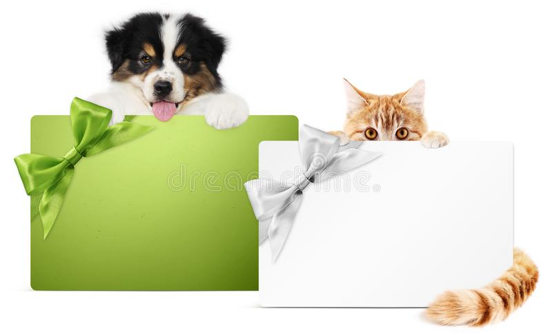 Pet store gift card, puppy dog and kitten cat together isolated on white background, for promotional discounts and wishes a Merry royalty free stock images