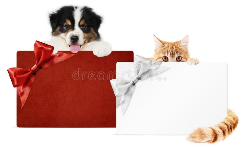 Pet store gift card, puppy dog and kitten cat together isolated on white background, for promotional discounts and wishes a Merry royalty free stock photos