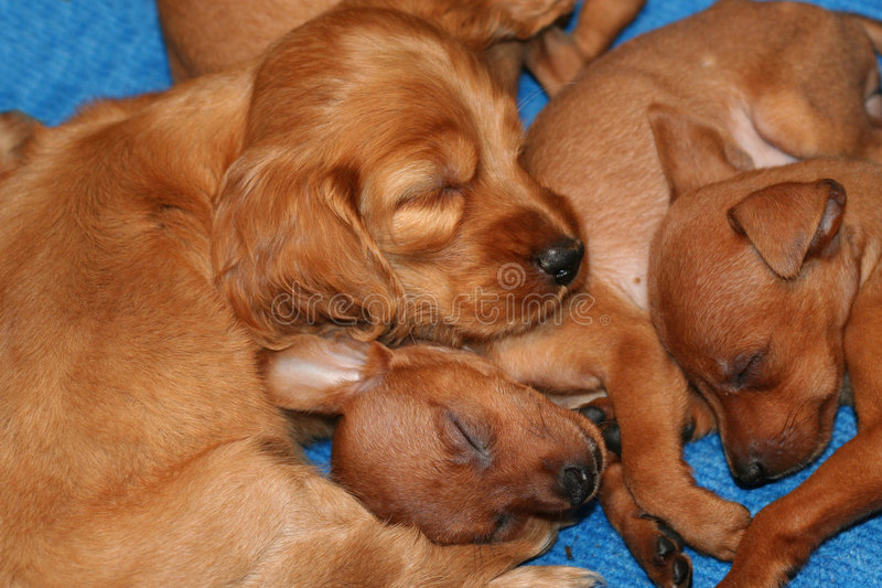 Pet store puppies. Variety of puppies asleep in a pet store stock photo