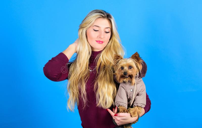 Pet supplies. Dressing dog for cold weather. Which dog breeds should wear coats. Woman carry yorkshire terrier. Dogs. Need clothes. Girl adorable blonde hug royalty free stock images