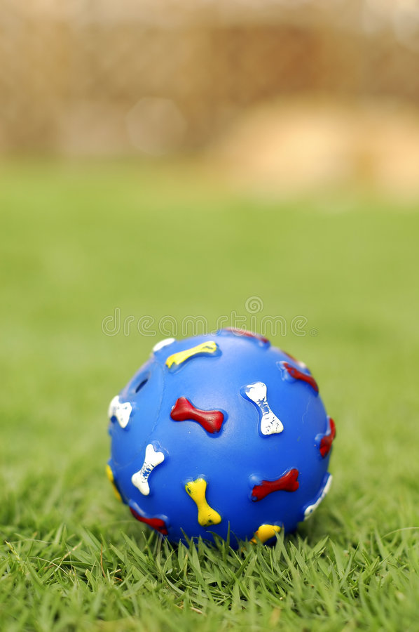 Pet toy ball. A pet toy blue ball on grass at park. Focus on the ball stock photos