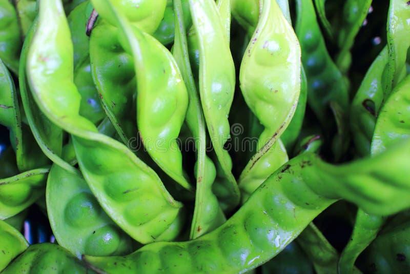 Petai、苦涩豆、扭转的瓜尔豆、臭鬼或者恶臭豆 免版税库存图片