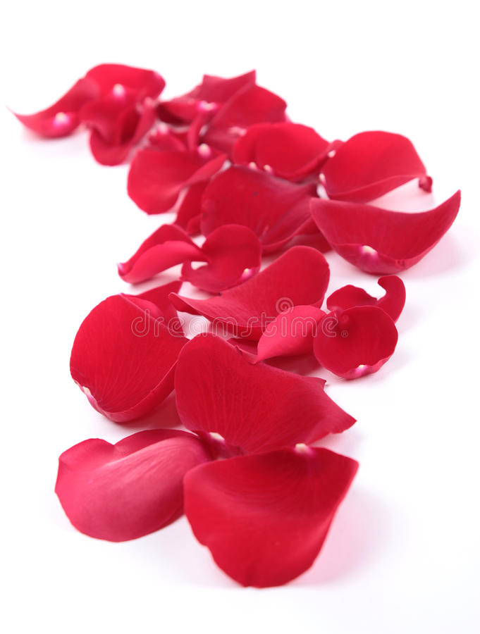 Download Petal Stock Images - Image: 27563574