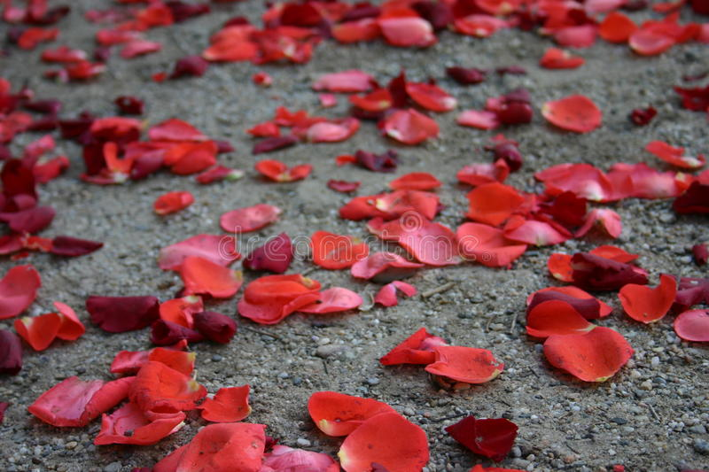 Petal Confetti royalty free stock images