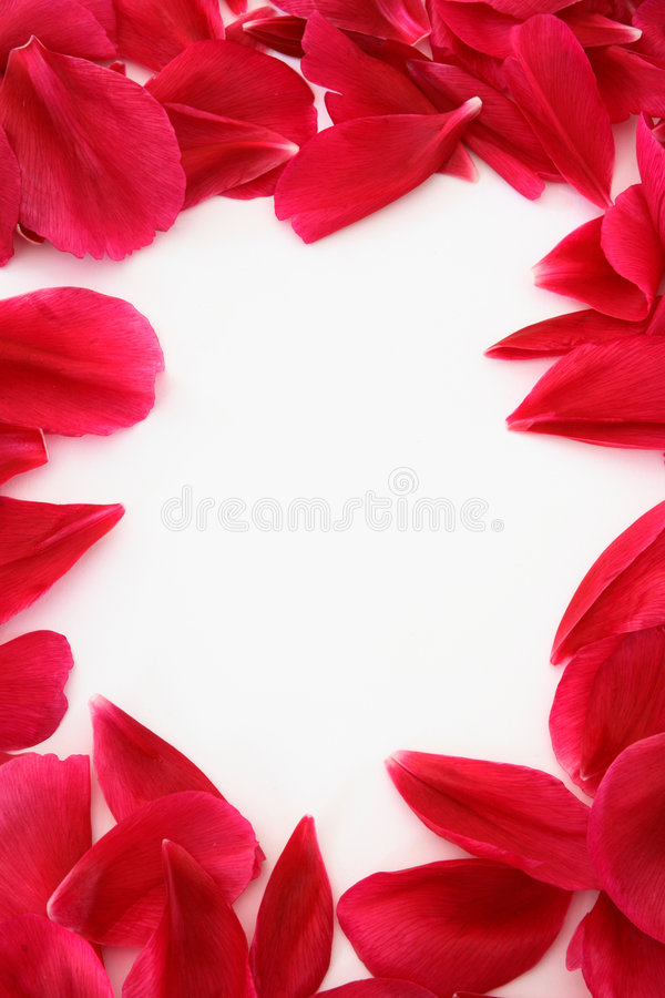 Petal frame stock photography