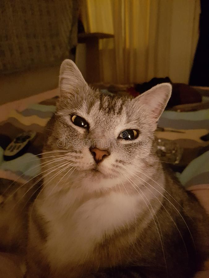 Petal Puss stock image