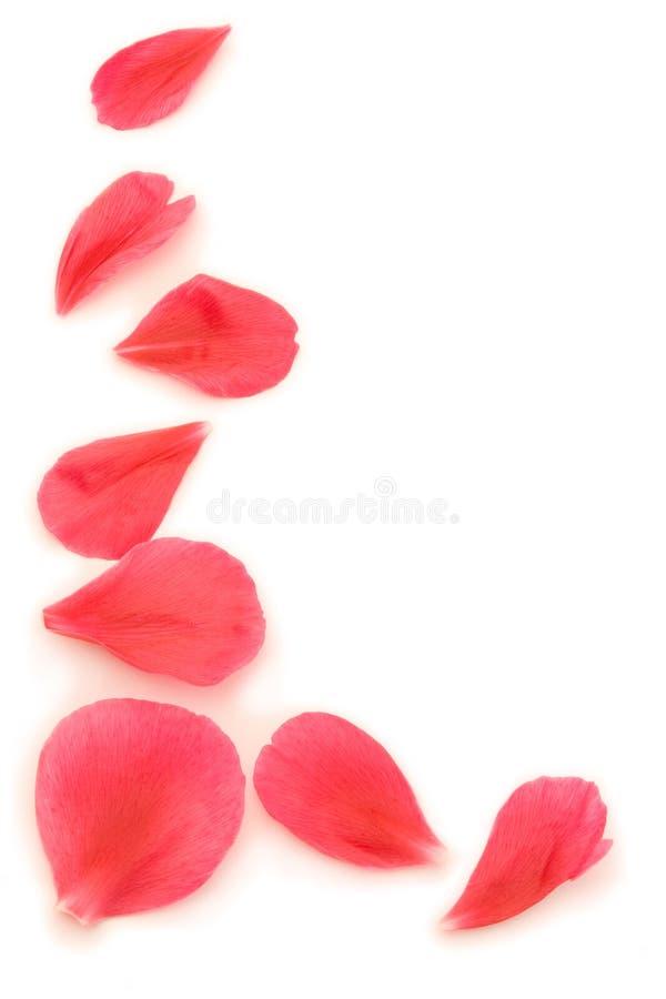 petal z obrazy stock
