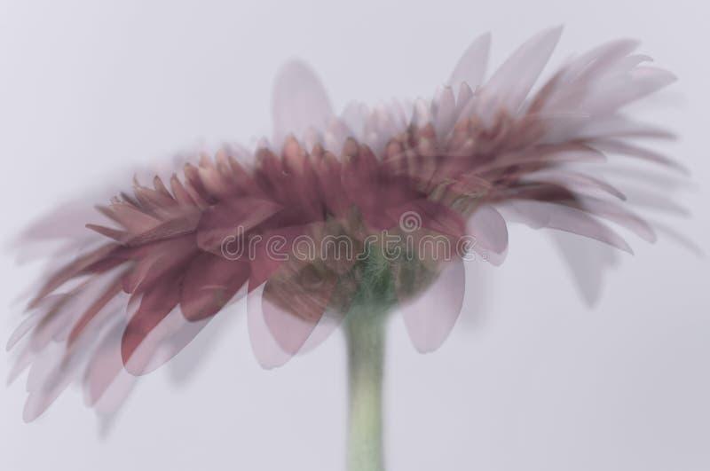 petali illustrazione di stock