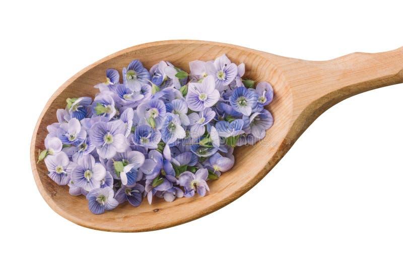 Petali blu del fiore in una vista di legno del primo piano del cucchiaio da sopra isolato su fondo bianco fotografia stock